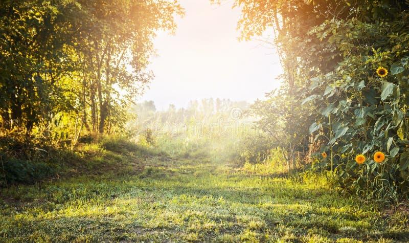夏天风景,与绿草和树,与阳光天空,自然本底的黄色花 免版税库存照片