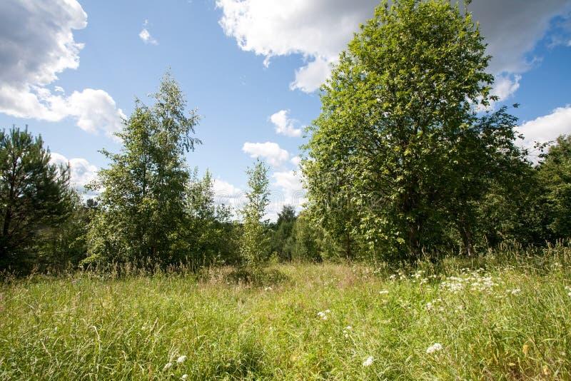 夏天风景:绿草草甸、树和风景天空蔚蓝 免版税库存图片