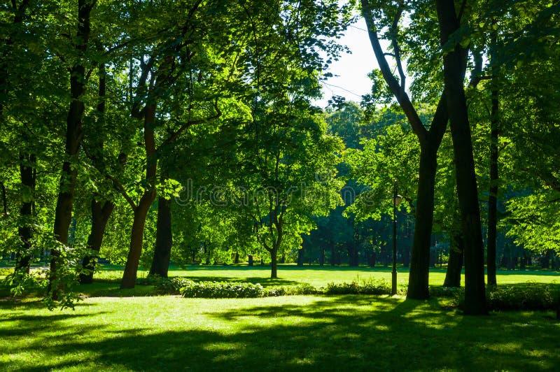 夏天风景-有绿色夏天树的五颜六色的夏天城市公园在晴朗的天气 免版税图库摄影