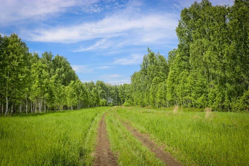 夏天风景-舒展入在桦树森林中的距离的领域路 旅行的概念 免版税库存照片