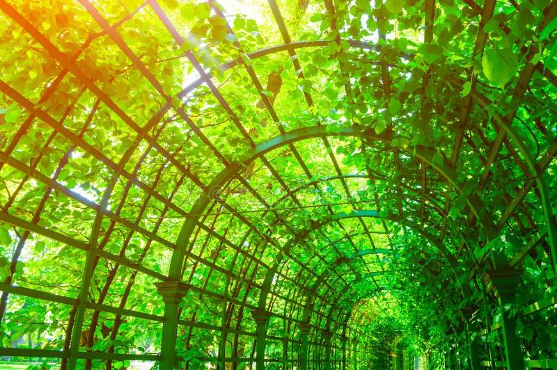 夏天风景-金属酸疼用绿色上升的植物盖的隧道,夏天风景 库存照片