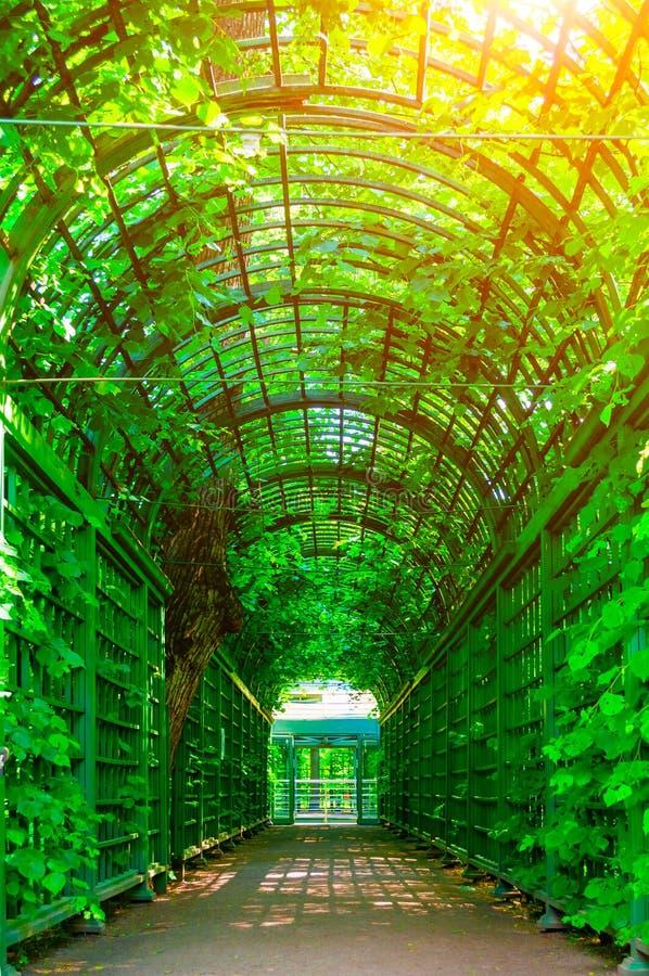 夏天风景-金属酸疼用绿色上升的植物盖的隧道 免版税库存图片
