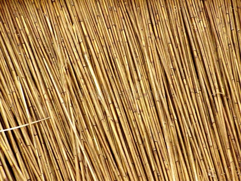 夏天,藤茎干燥背景 免版税库存照片