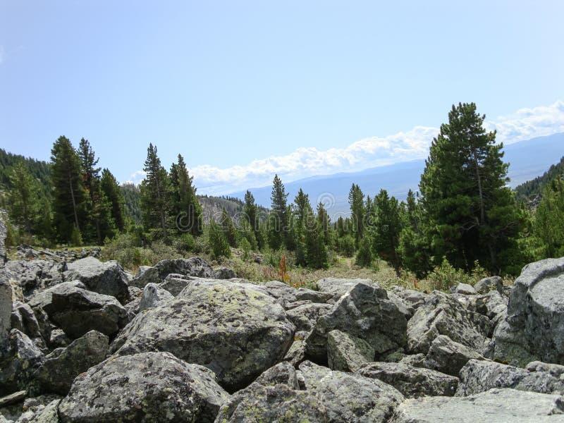 Download 夏天晴天 库存图片. 图片 包括有 结构树, 横向, 视图, beauvoir, 本质, 蓝色, 森林, 绿色 - 59104343