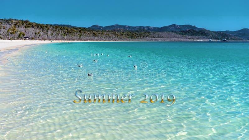 夏天2019文本-无危险游泳白色硅土沙子的大海的海鸥 库存图片