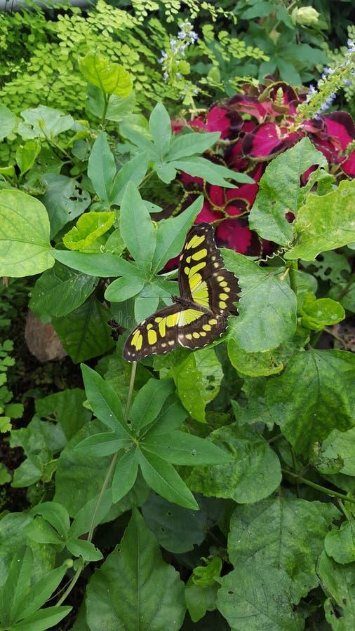 夏天蝴蝶 库存照片