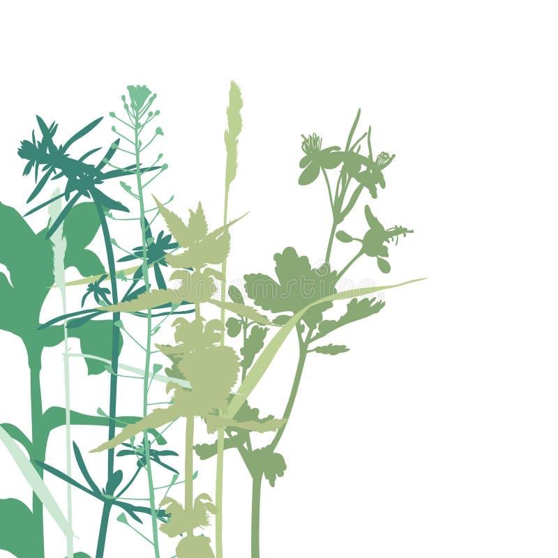 夏天herbals背景 向量例证