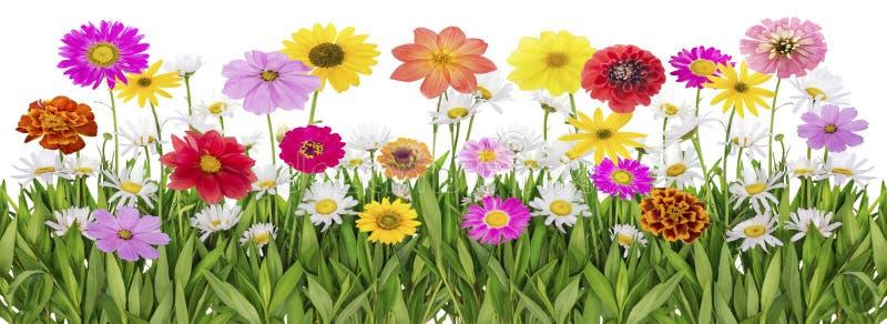 Download 夏天meadowborder 库存图片. 图片 包括有 横向, 简单派, 照亮, 春黄菊, 季节, 本质 - 30331105