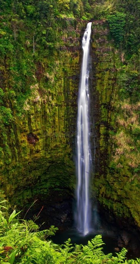 夏威夷密林瀑布 免版税库存图片