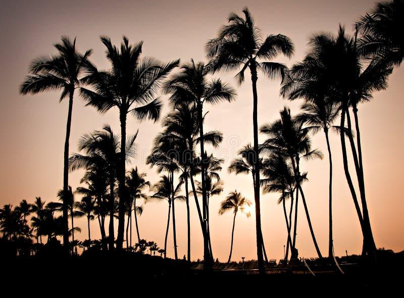 夏威夷日落树 免版税图库摄影