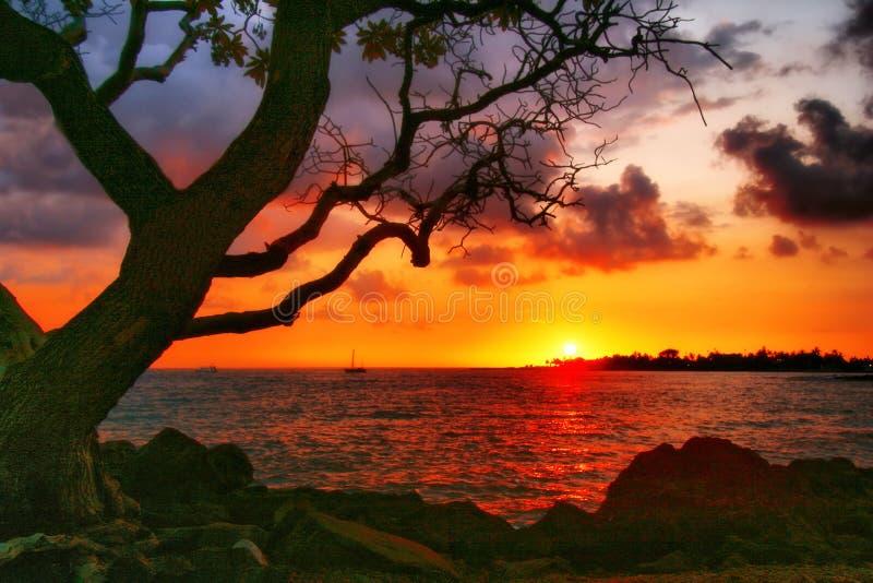 夏威夷晴朗的结构树 库存图片