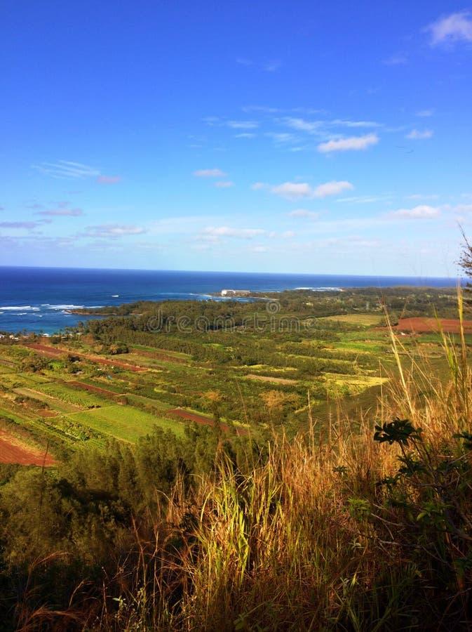夏威夷种田 免版税库存图片