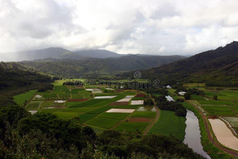 夏威夷谷 免版税库存图片