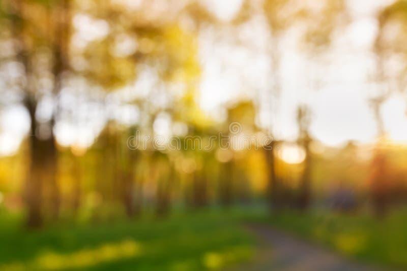 夏季抽象自然模糊户外背景 波克岛公园林地的高树 免版税库存照片