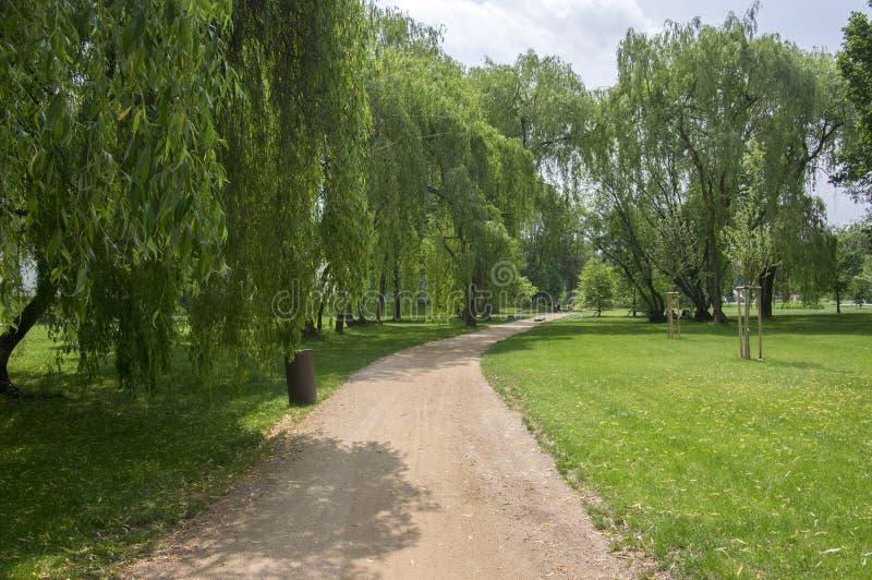 夏时、绿叶、道路投掷和长凳的,晴朗,蓝天公园 免版税库存图片