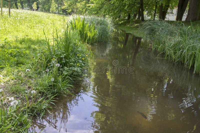夏时、草甸、绿叶、小河和反射的公园 免版税库存图片