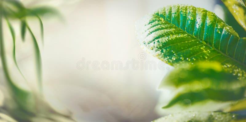 夏时与绿色热带叶子、横幅或者模板的自然背景 库存照片