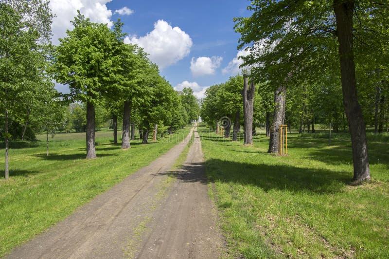 夏时的公园,绿叶,道路, 库存图片