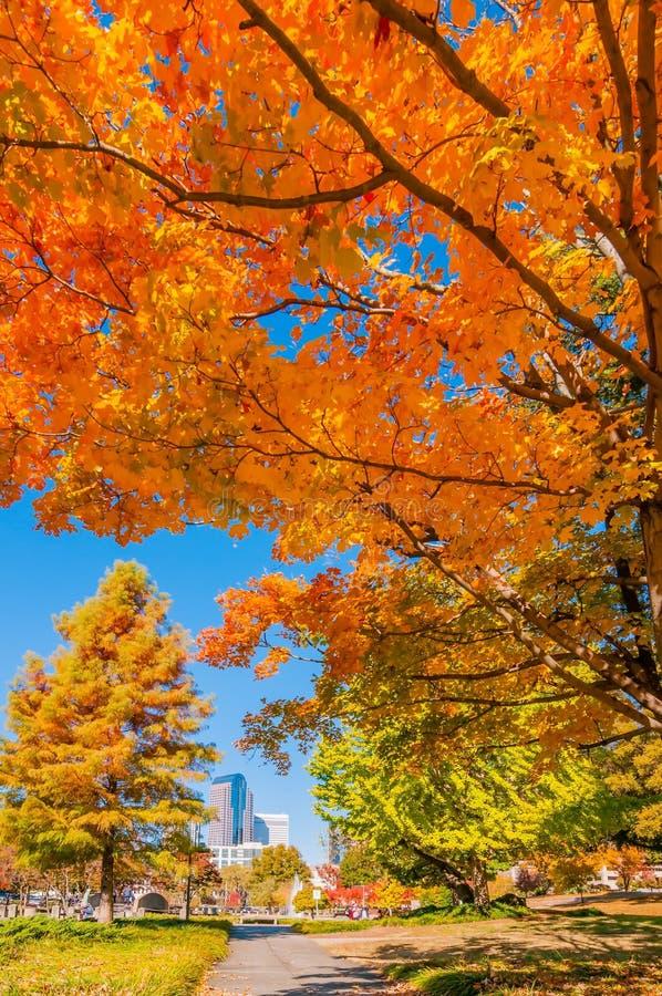 夏洛特市地平线秋天季节 免版税库存照片