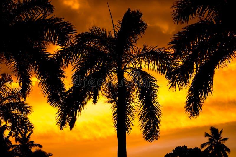 夕阳棕榈 免版税库存图片
