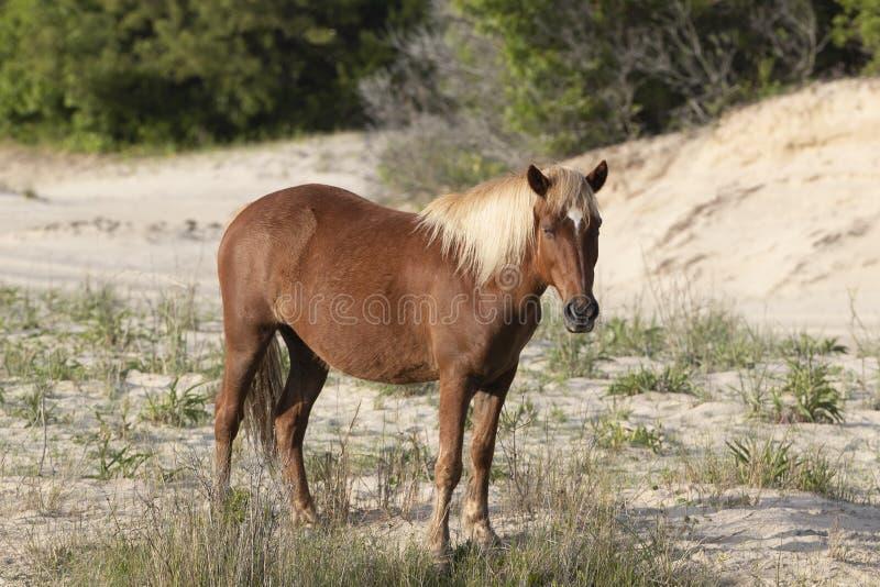 外滩群岛野马 免版税库存照片