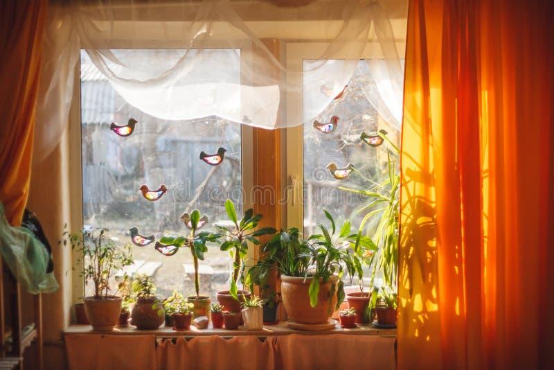 从外部窗口的阳光涌入屋子厚实的黄色帷幕和白色薄纱 植物和树在窗台 免版税库存照片