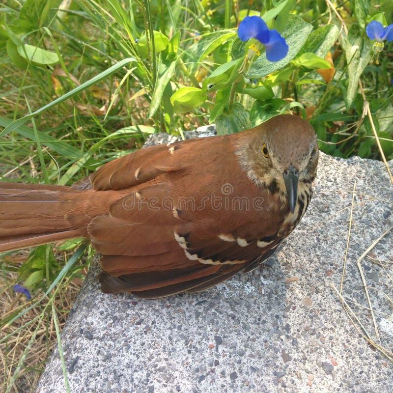 外面美丽的鸟 免版税库存图片