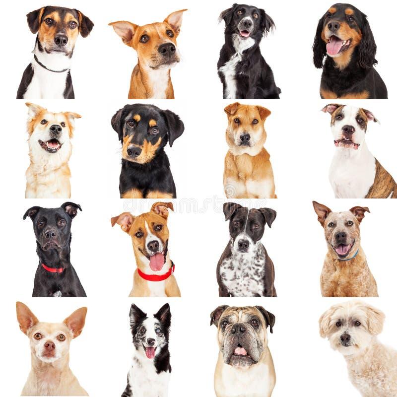 多个杂种狗特写镜头 图库摄影