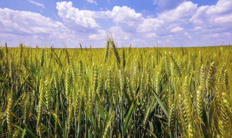 Download 多云域天空麦子 库存照片. 图片 包括有 地产, beautifuler, 食物, 本质, 农田, 谷物 - 72364934