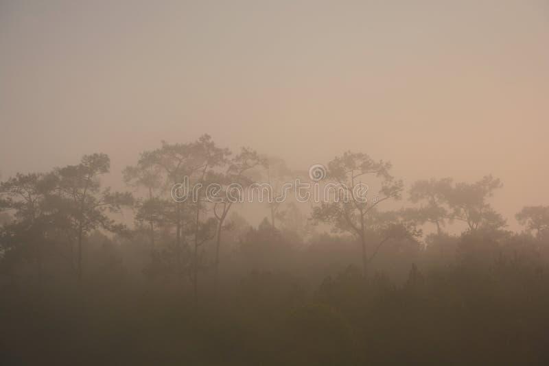 多云天气有雾的森林 免版税图库摄影