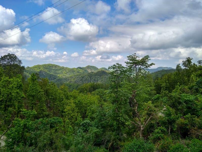多云天空在森林里 免版税库存图片