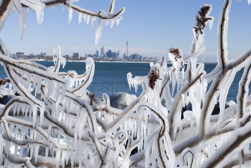 多伦多冬天 免版税图库摄影
