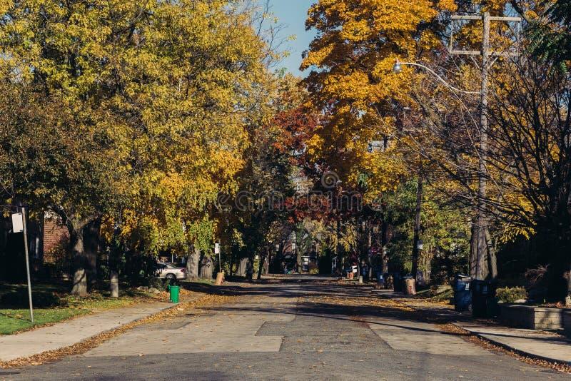 多伦多街道在秋天期间的 库存照片