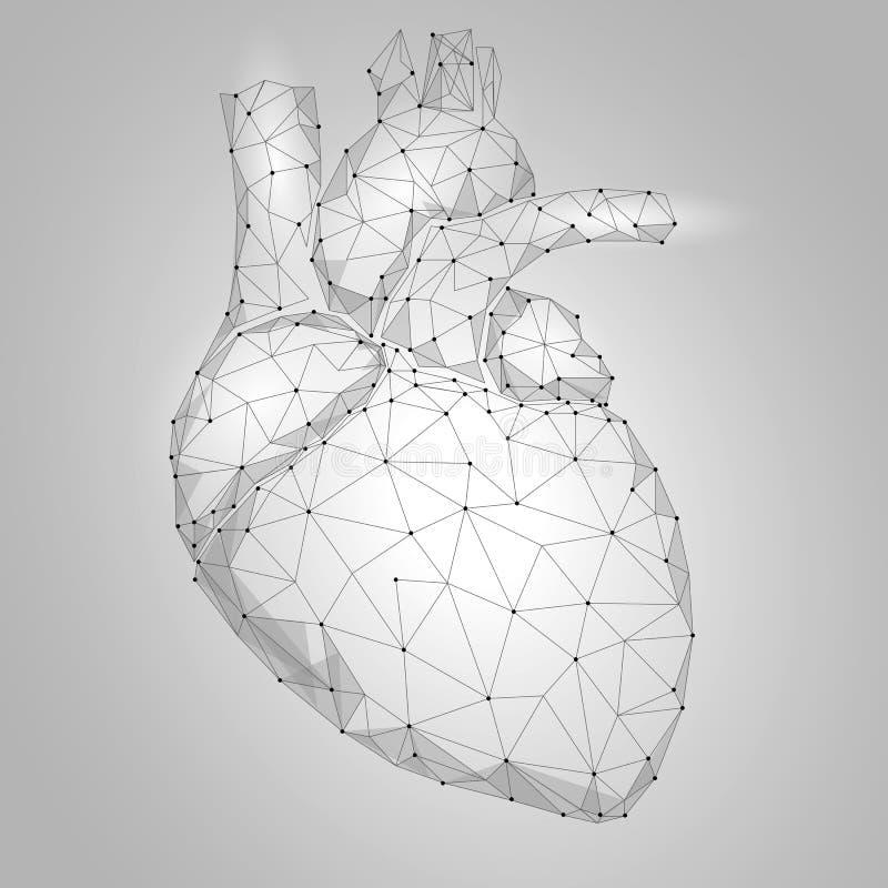 多低人的心脏内脏的三角 被连接的小点白色灰色中立颜色技术3d模型医学健康身体pa 向量例证