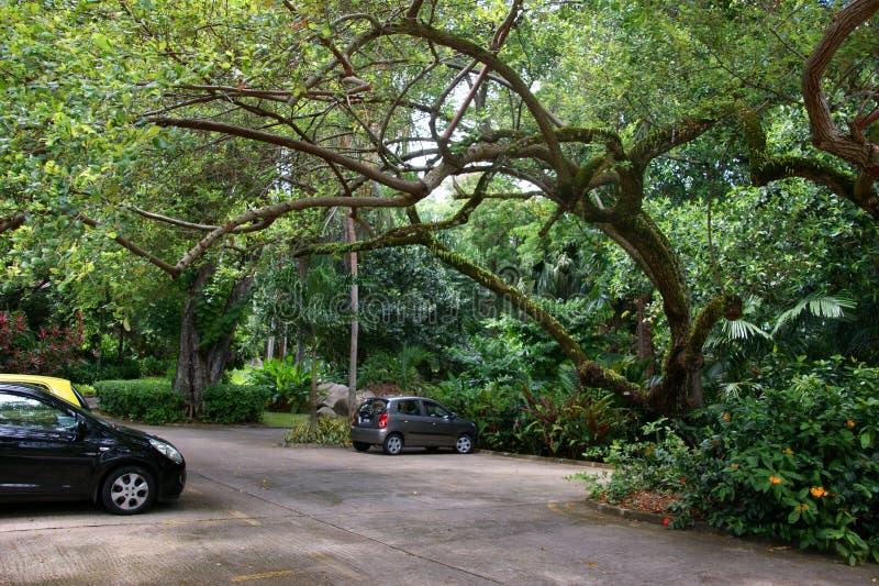 维多利亚植物园(Mont Fleuri植物园塞舌尔群岛) 免版税图库摄影