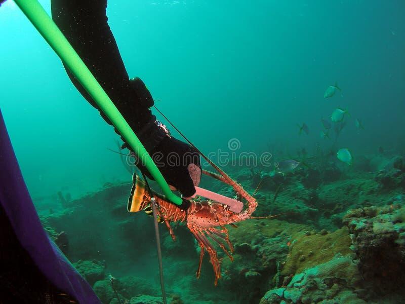 多刺佛罗里达的龙虾 免版税库存照片
