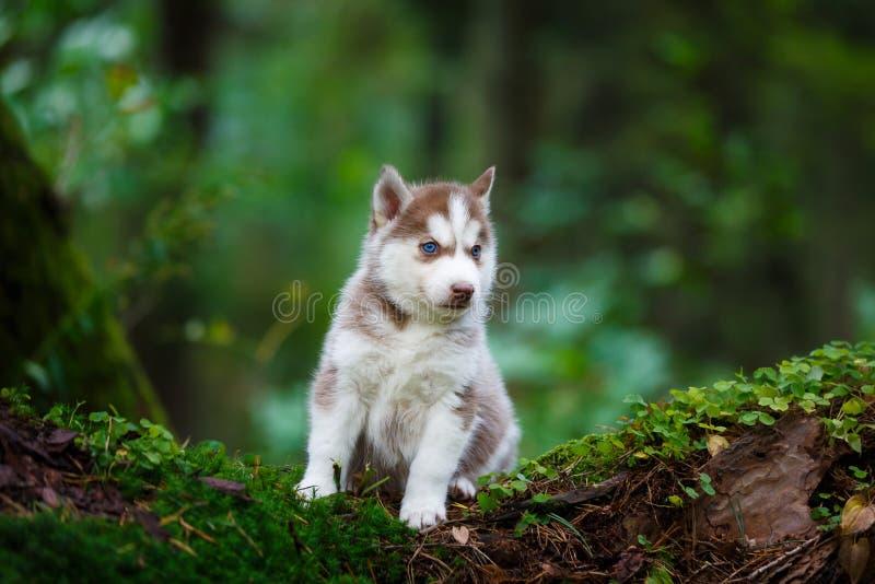 多壳的小狗在一个狂放的森林里 库存图片