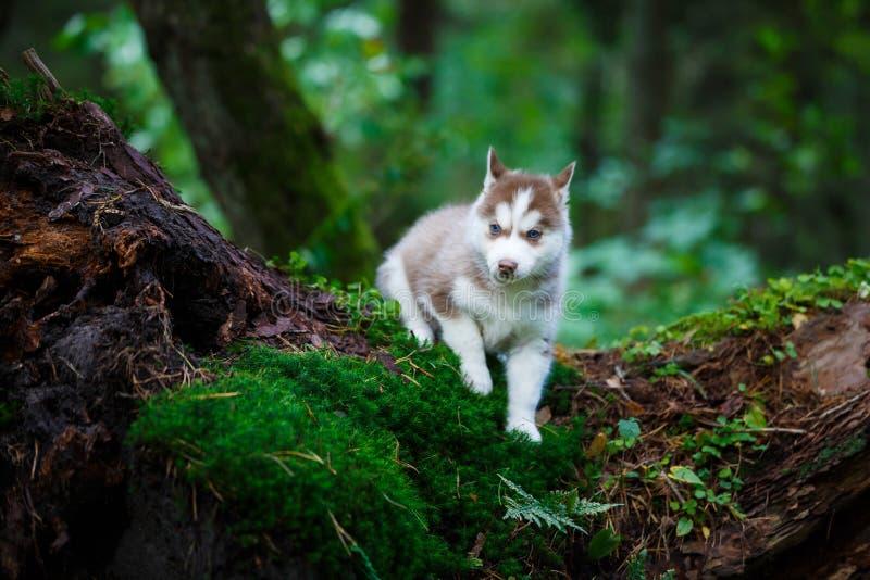 多壳的小狗在一个狂放的森林里 免版税图库摄影