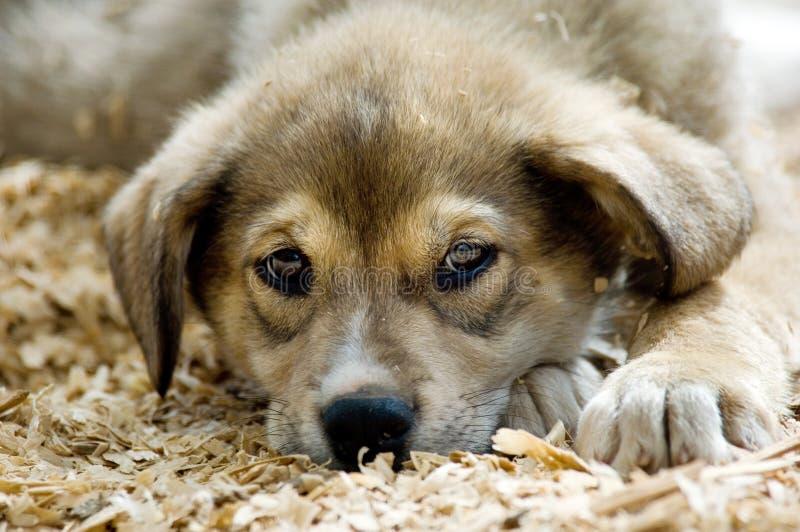 多壳的小狗 库存照片