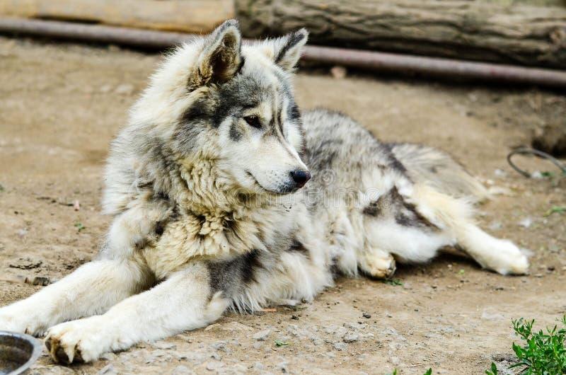 多壳的狗 免版税库存图片