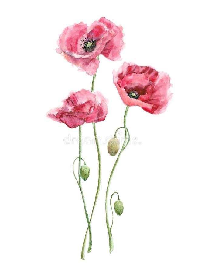 多孔黏土更正高绘画photoshop非常质量扫描水彩 桃红色花 向量例证