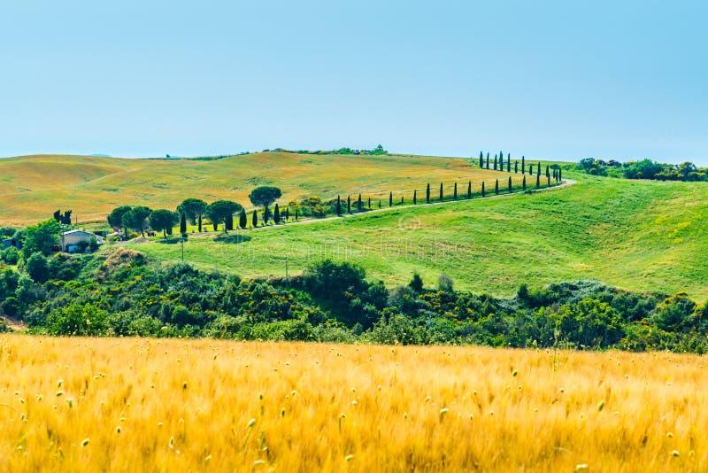 多小山托斯坎领域美好的风景  图库摄影