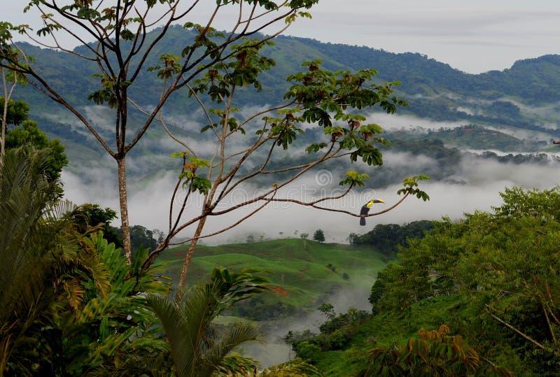 多山哥斯达黎加的雨林的一幅全景 免版税库存照片