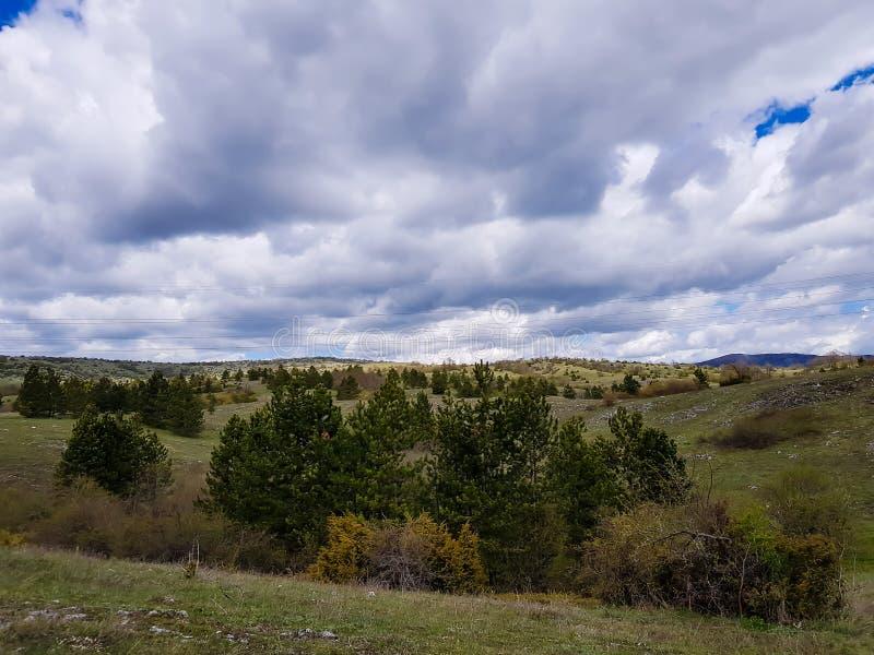 多山春天乡下、美妙的风景与象草的草甸和树木丛生的小山 免版税库存图片