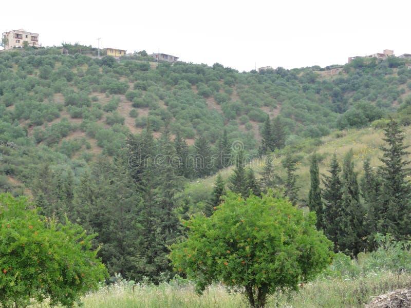 多山风景在Kabylia -卡拜尔人山 库存图片