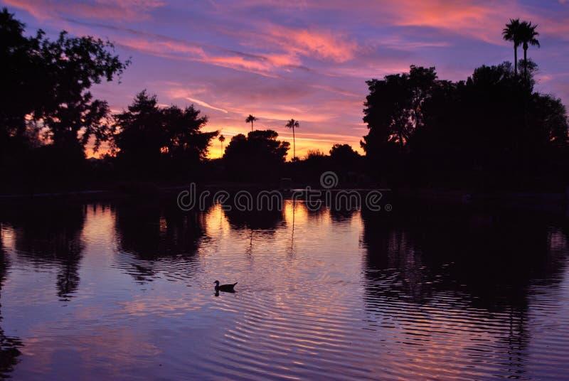 多布森大农场日落照片棕榈树反射 免版税库存照片