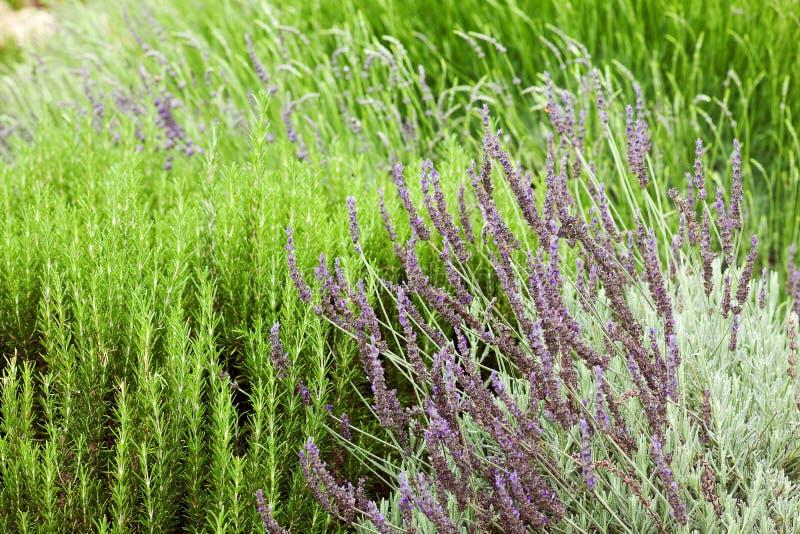 多年生植物 免版税库存图片