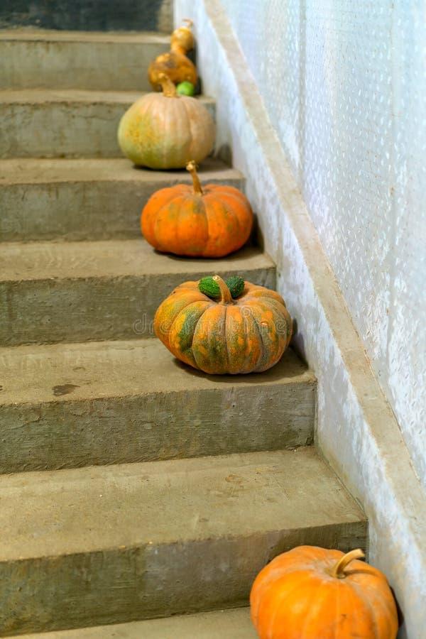 多彩多姿的南瓜在农舍的石台阶 库存照片