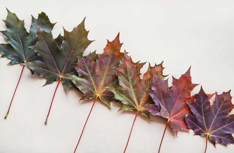 多彩多姿的枫叶被计划对角地 秋天平的位置 免版税库存图片