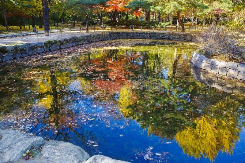 多彩多姿的树的反射在湖在秋天在汉城, 免版税库存图片